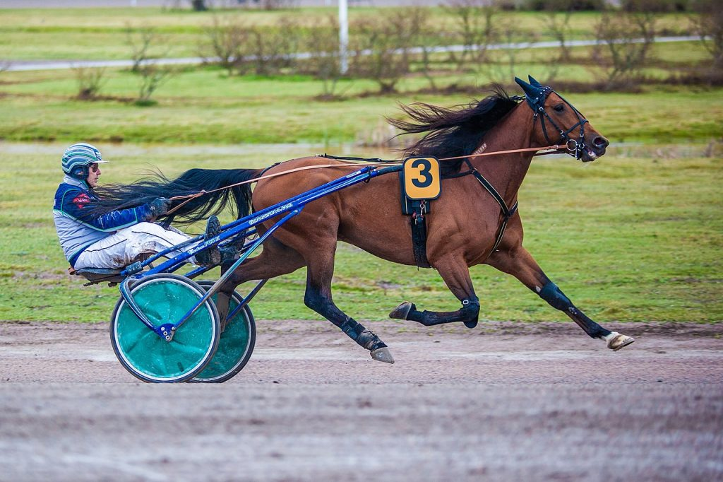 All you need to know about harness racing